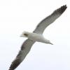 New-Zealand-Day-Twelve-Dunedin-birds-7-of-7
