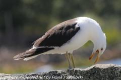 New Zealand Day Twenty Auckland Rangitoto Island birds February 25 2019