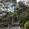 New-zealand-Day-Twenty-Auckland-Rangitoto-deive-and-hike-to-summit-14-of-20