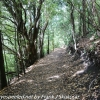 New-zealand-Day-Twenty-Auckland-Rangitoto-hike-from-summit-4-of-39