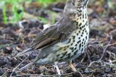 New Zealand Day Two: Christchurch Botanical Gardens birds Thursday February 7 2019