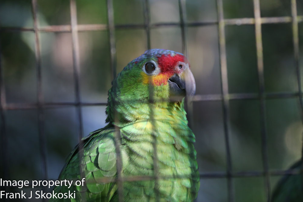 parrots (1 of 7).jpg