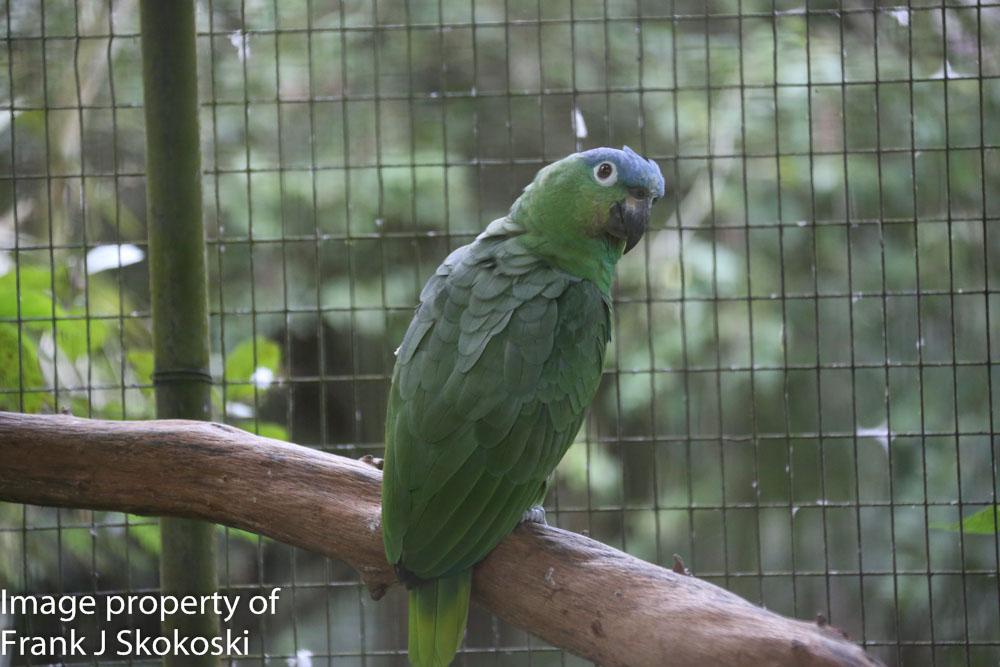 parrots (3 of 7).jpg