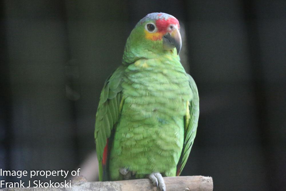 parrots (5 of 7).jpg