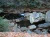 Penrose Reservoir -13