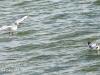 Gdansk Sopot birds-401