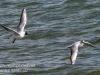Gdansk Sopot birds-408