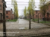 Auschwitz exhibits gas chambers -13