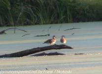 PPL-Wetlands-1-of-59