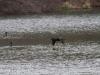 PPL wetlands-11