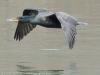 PPL wetlands-15
