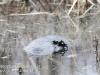 PPL wetlands-2