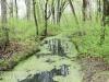 PPL Wetlands -7
