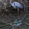 PPL-Wetlands-17-of-51