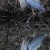 PPL-Wetlands-18-of-51