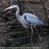PPL-Wetlands-19-of-51