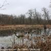 PPL-Wetlands-8-of-51