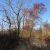 PPL-Wetlands-1-of-1