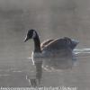 PPL-Wetlands-3-of-41