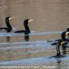 PPL-Wetlands-8-of-41