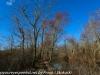 PPL Wetlands   (4 of 24)