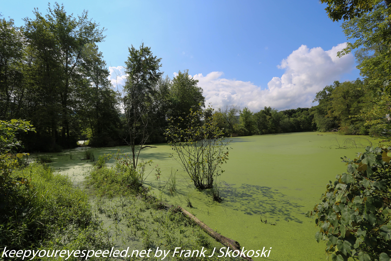 PPL Wetlands  (10 of 36)
