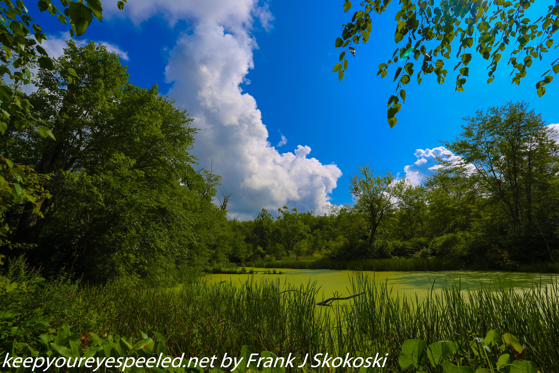 PPL Wetlands  (8 of 36)