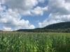 PPL Wetlands  (9 of 10)