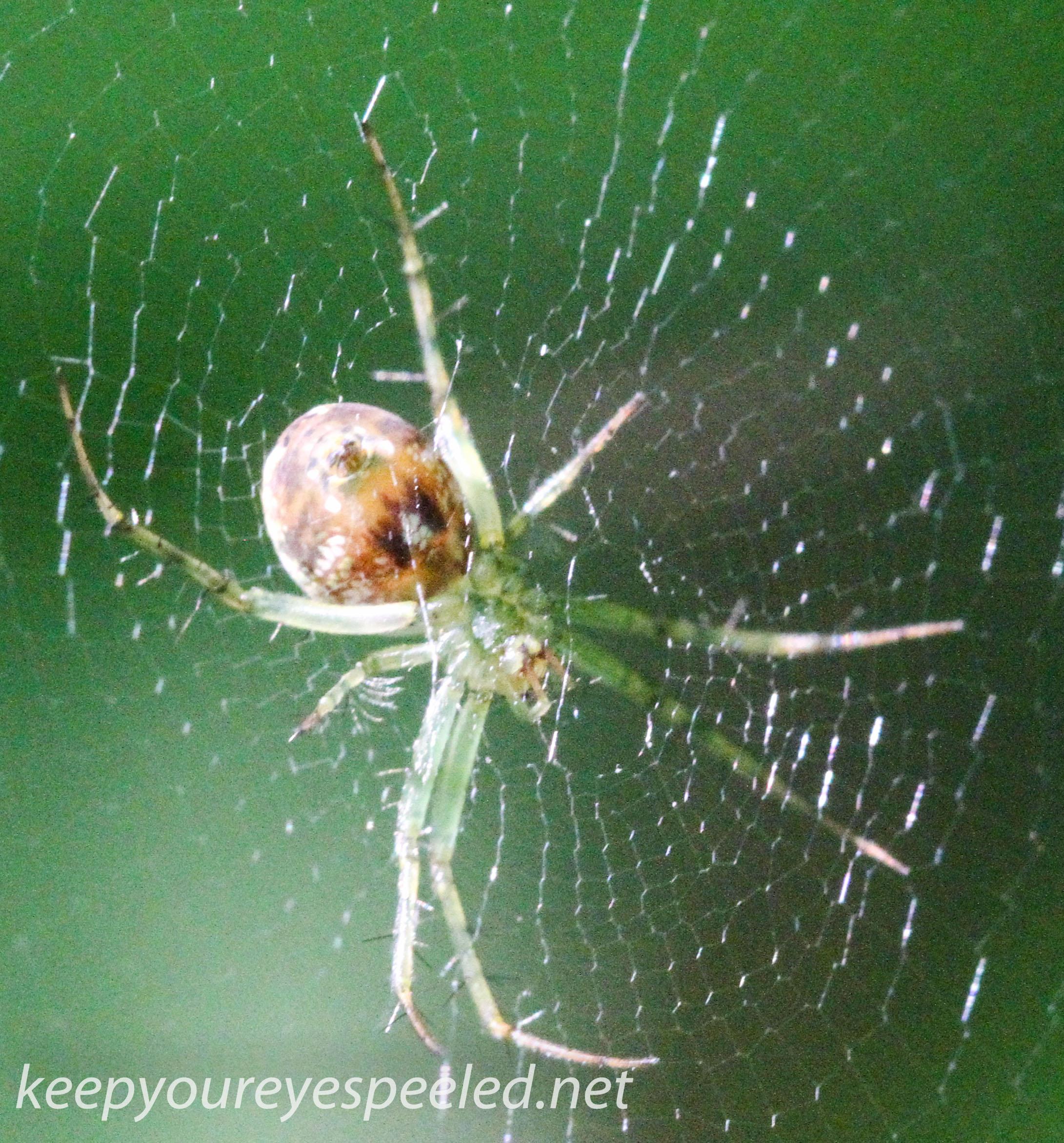 PPL  Wetlands spider (1 of 1).jpg