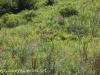PPL Wetlands (17 of 57)