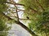 PPL Wetlands bald eagle -026