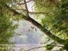 PPL Wetlands bald eagle -037