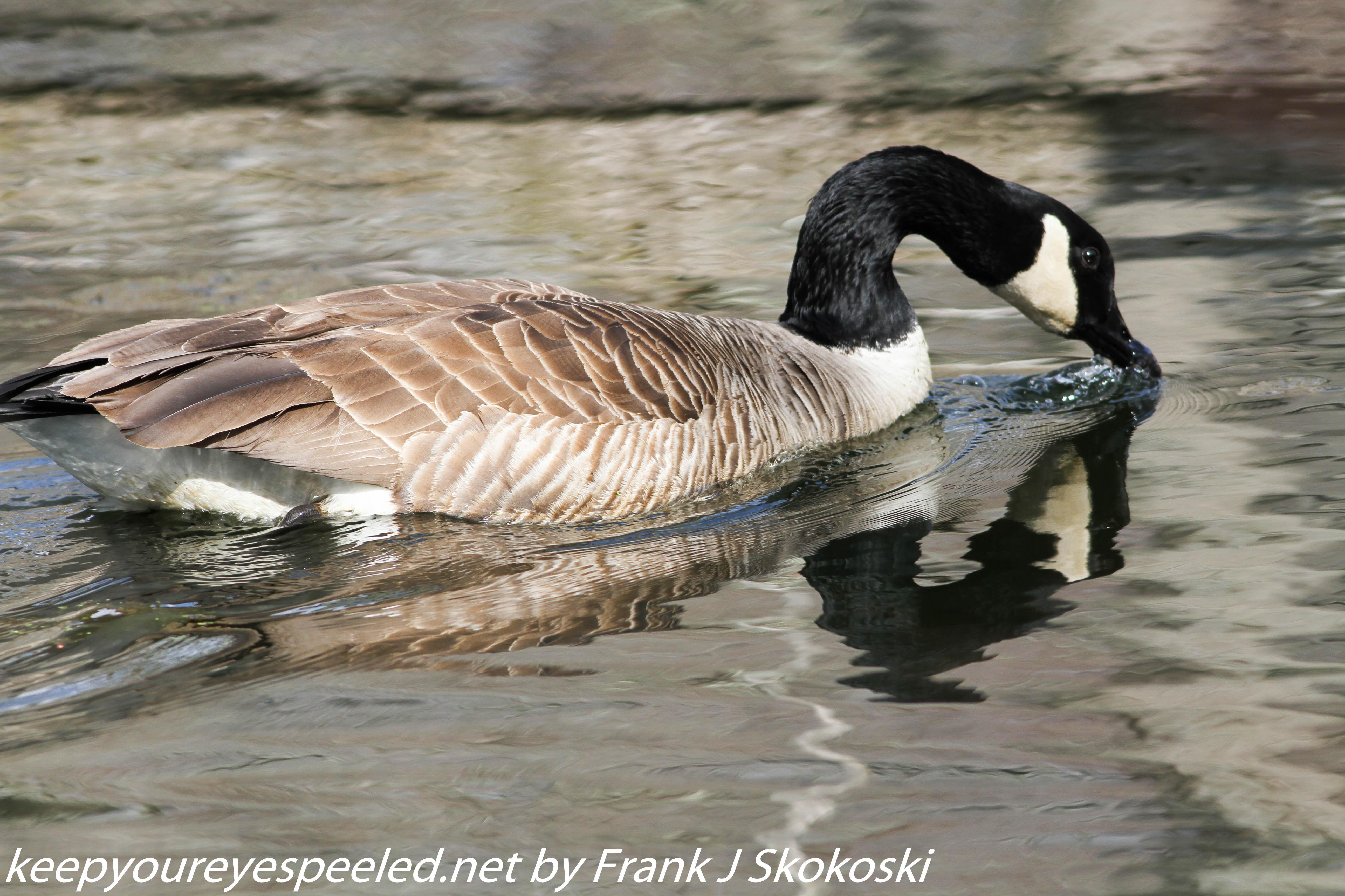 PPL Wetlands   (31 of 50)