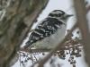 PPL Wetlands birds (1 of 24)