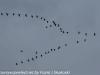 PPL Wetlands birds (11 of 24)