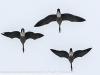 PPL Wetlands birds (13 of 24)