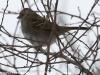 PPL Wetlands birds (14 of 24)