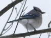 PPL Wetlands birds (15 of 24)