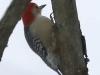 PPL Wetlands birds (16 of 24)