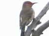 PPL Wetlands birds (17 of 24)