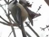 PPL Wetlands birds (18 of 24)