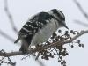 PPL Wetlands birds (2 of 24)