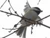 PPL Wetlands birds (20 of 24)