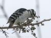 PPL Wetlands birds (3 of 24)