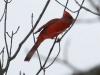PPL Wetlands birds (4 of 24)