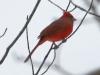 PPL Wetlands birds (5 of 24)