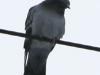 PPL Wetlands birds (7 of 24)