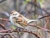 PPL Wetlands birds -13