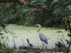 PPL Wetlands birds  (1 of 29)