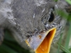 PPL Wetlands birds  (10 of 29)